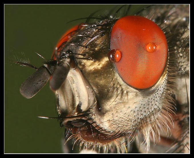 Fly Portrait1