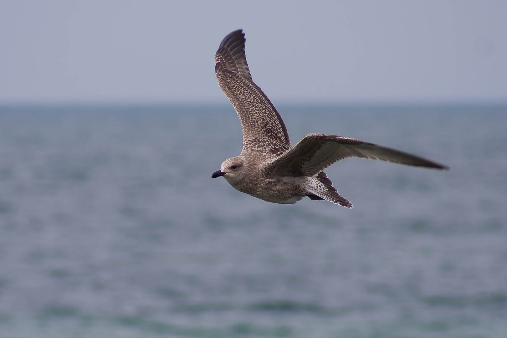 Fly with me over the ocean ....
