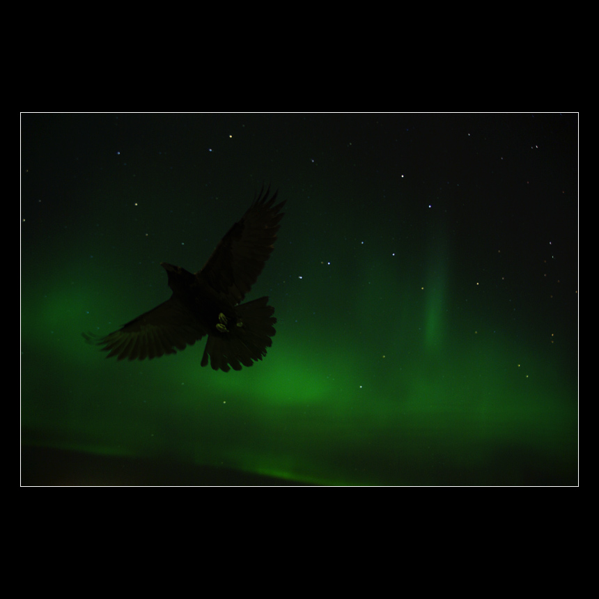 Fly With the Norhern Lights