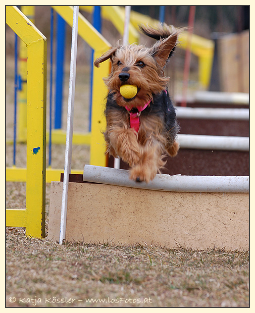 Flyball is also fun