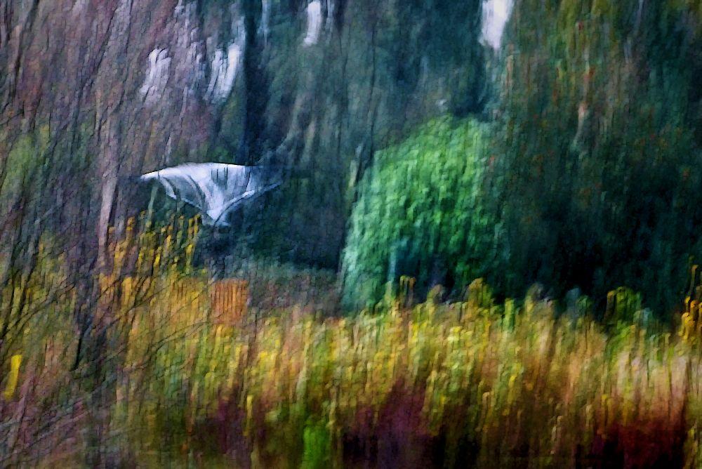 ... flying away
