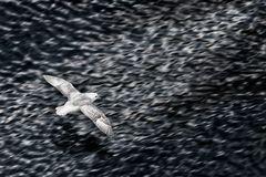 Flying Backbord