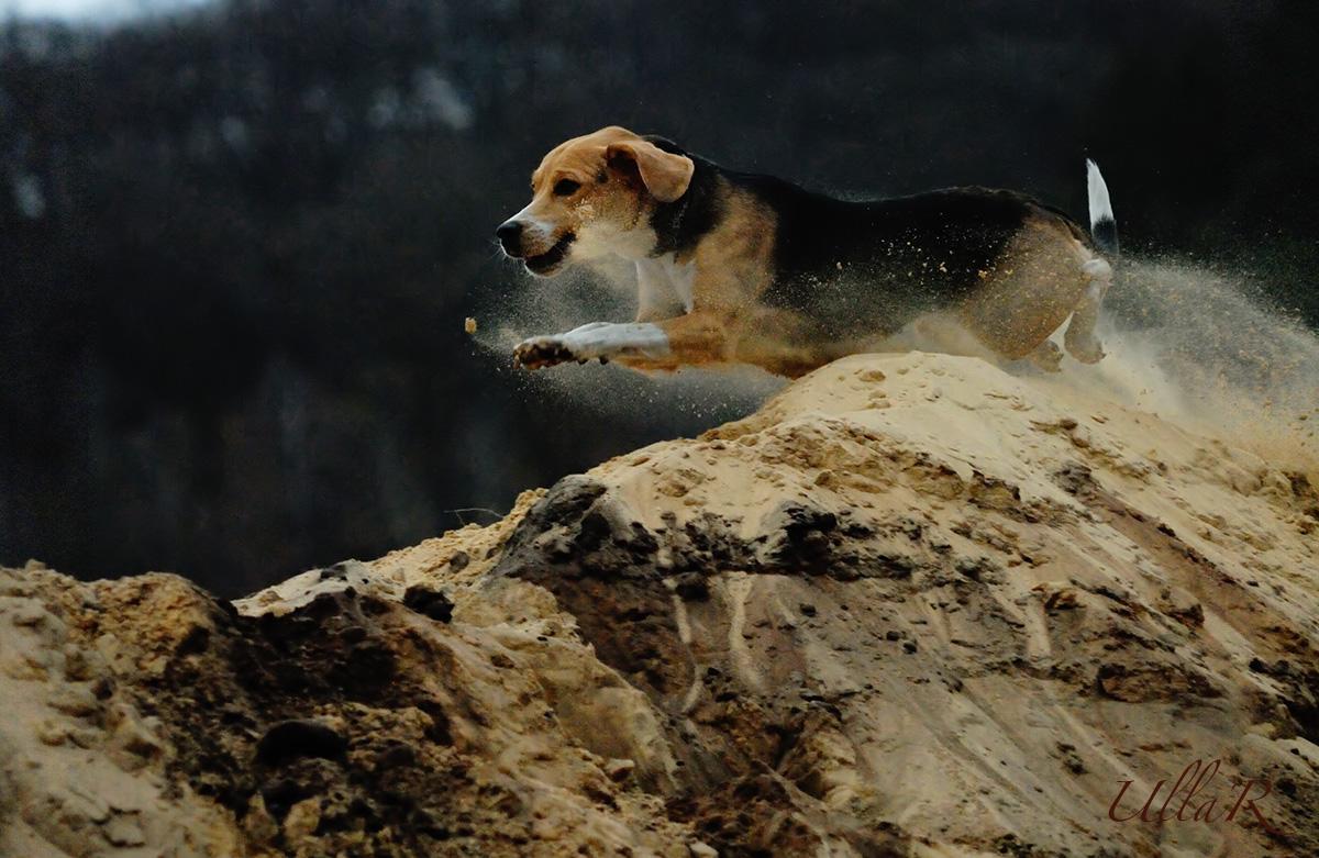 Flying Beagle Luna