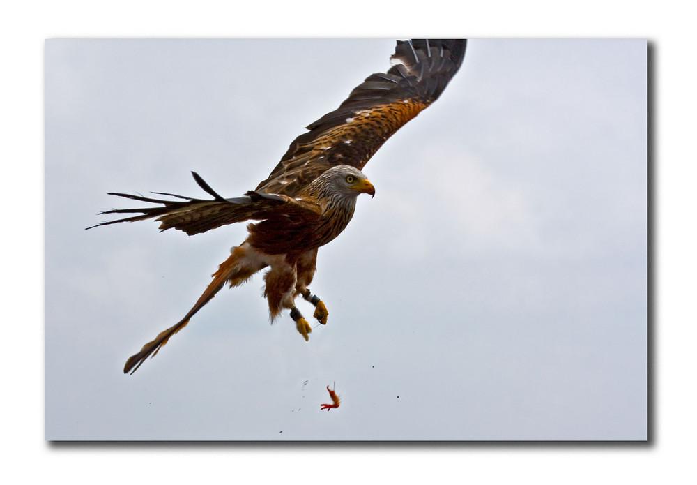Flying carpaccio
