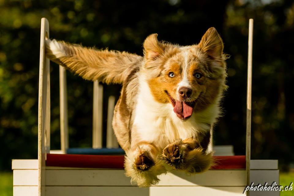 Flying Dog..