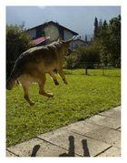 **flying dog**