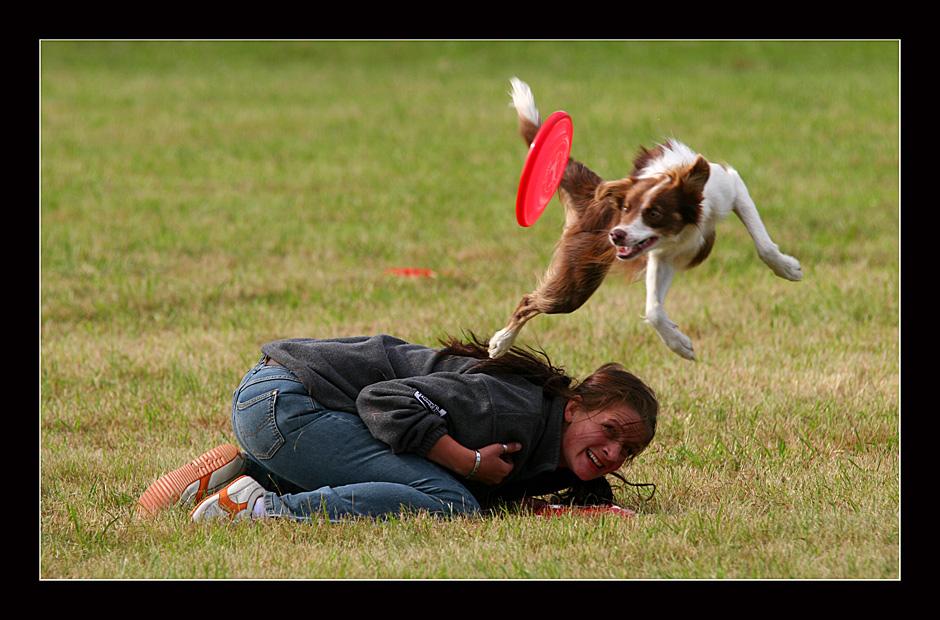 Flying dogs I
