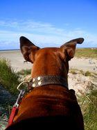 flying ears :-)