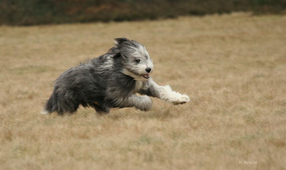 flying hairball