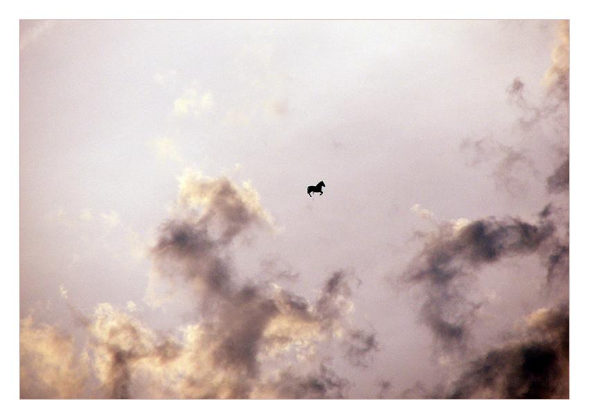 [flying horse]