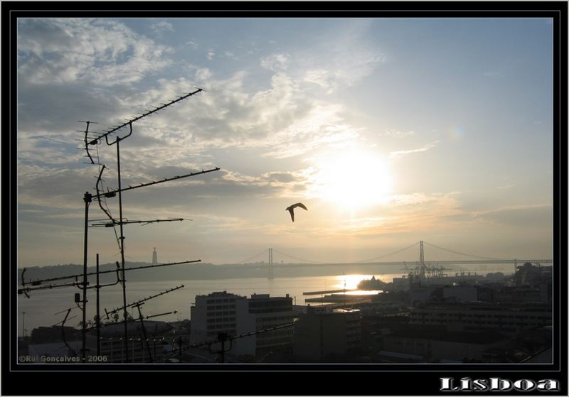 Flying in the Wings of Lisbon