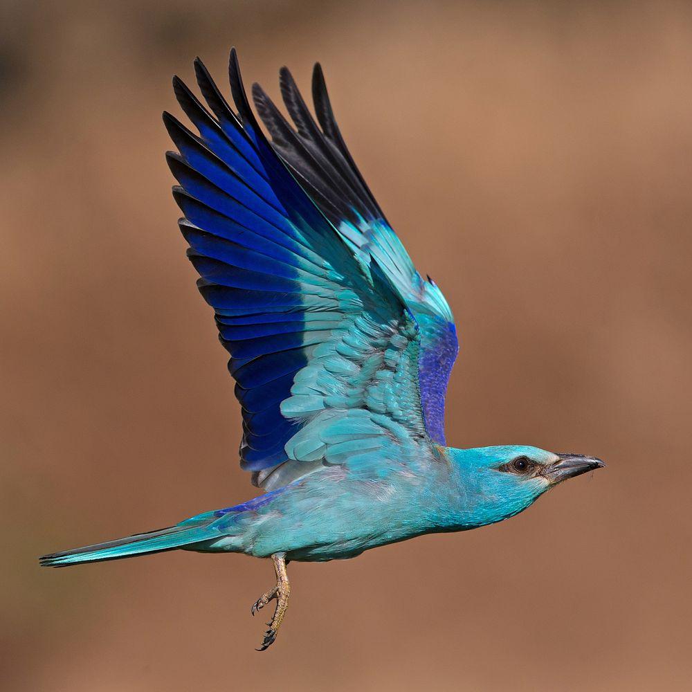 flying roler 3