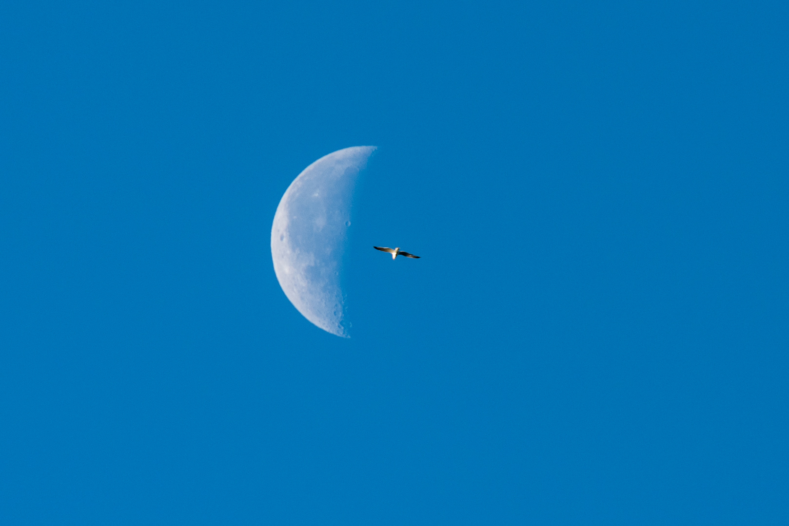 flying to the Moon