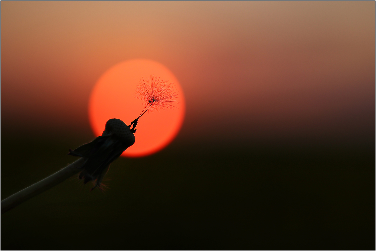 Flying to the sun...
