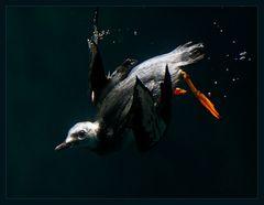 Flying underwater...