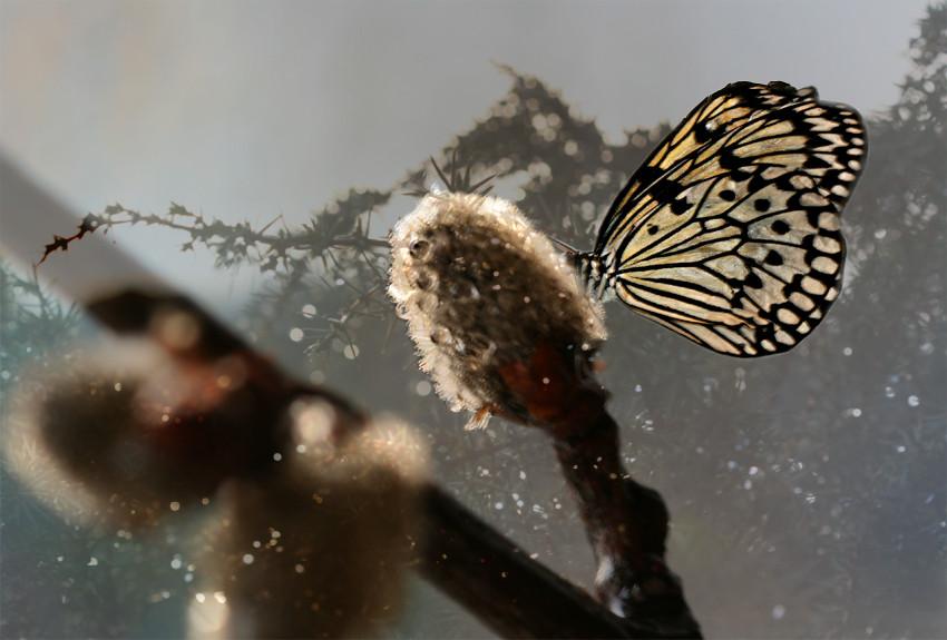 flymindfulness