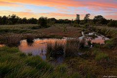 Fockbecker Moor 1