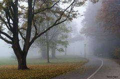 Fog 5.0