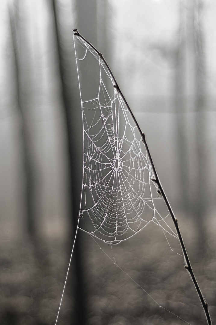 fog-catcher