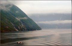 Fog in Hellesylt Fjord.
