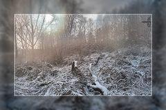 Fog in the winter sunlight