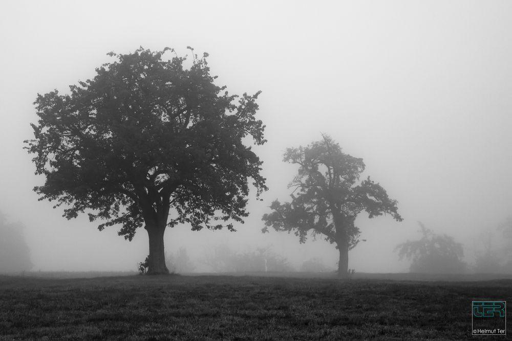 fog - nebulös