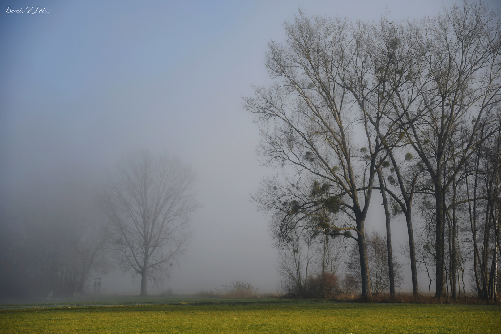 Fog on the country
