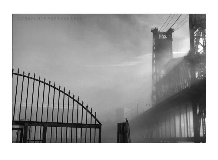 Fog Silence One 17
