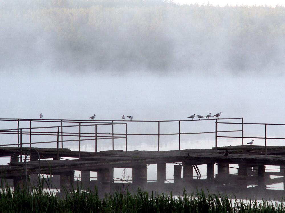 foggy dawn at the lake ....