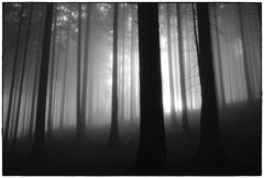 foggy forest III