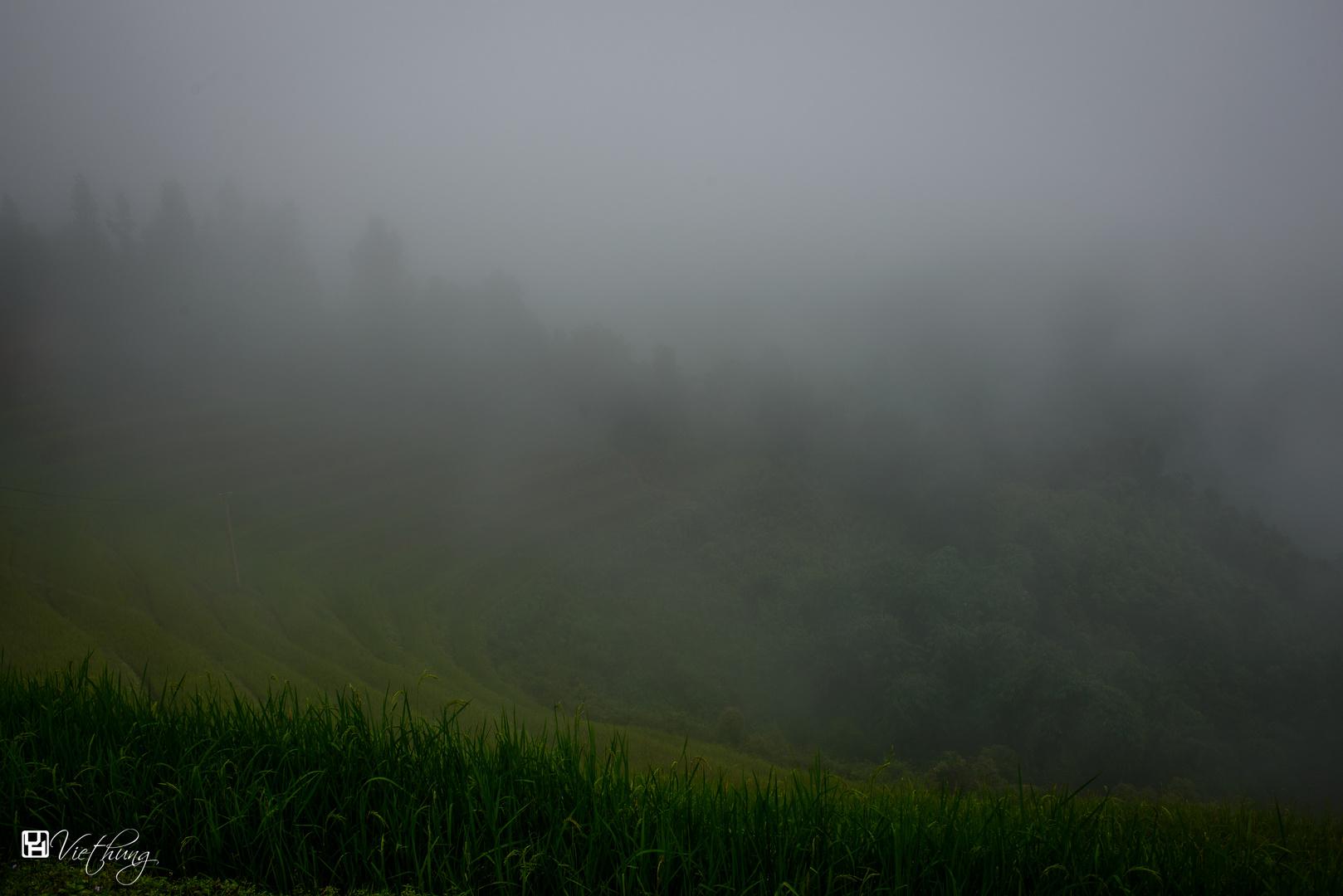 Foggy from Mu Cang Chai, Yen Bai
