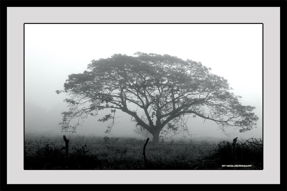 Foggy Honduran Morning #2