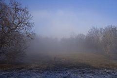 Foggy walk...