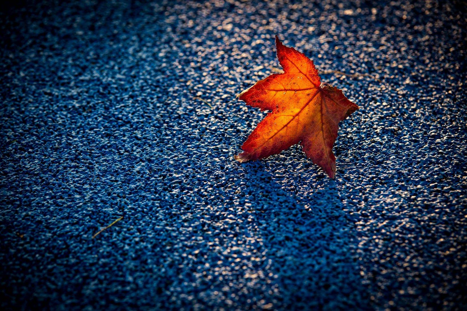 Foglia su tappeto blu alla Biblioteca degli alberi