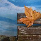 Foglia umida e panchina - Wet leaf and bench