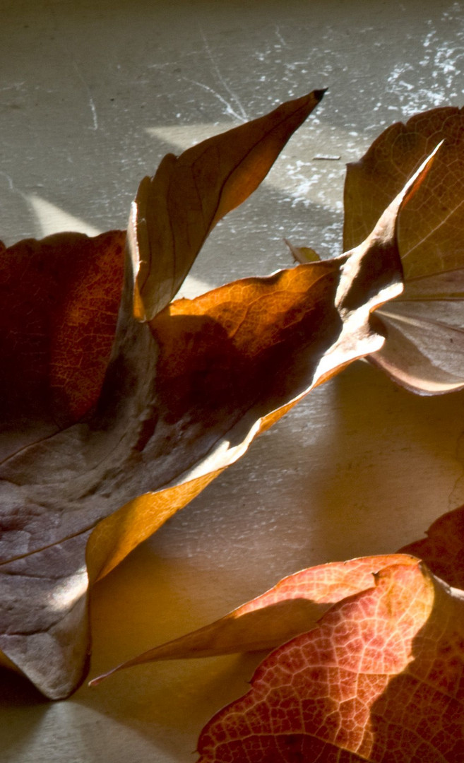 Foglie autunnali foto immagini piante fiori e funghi for Immagini fiori autunnali