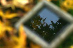 foglie riflesse