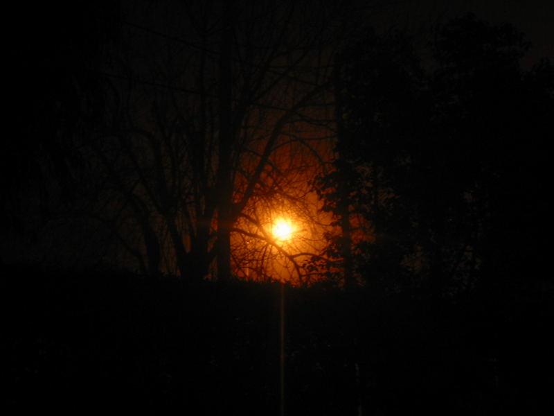 foglightree