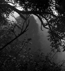 fog.wet.silence