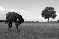 Fohlen auf der Weide