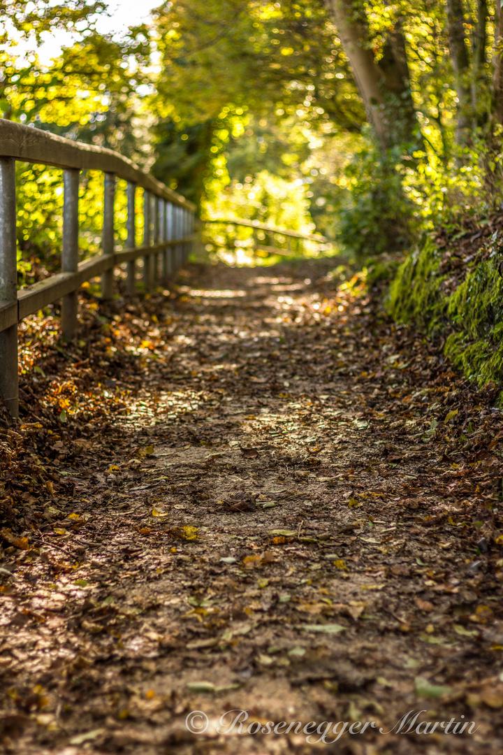 Folge deinem Weg