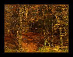 ...folgst Du mir... in den Indianerwald... ?