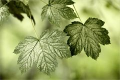 ... foliage ...