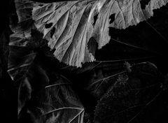 foliage (#2)