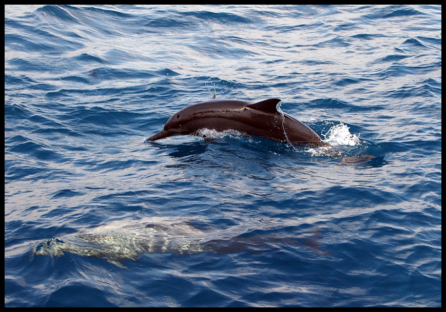 Follow the dolphins