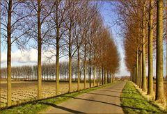 Follow the Trees!