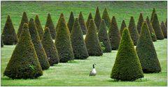 Fontainebleau – der Park VI