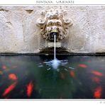 Fontana Urbinate