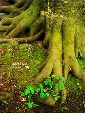 Foot of Tree