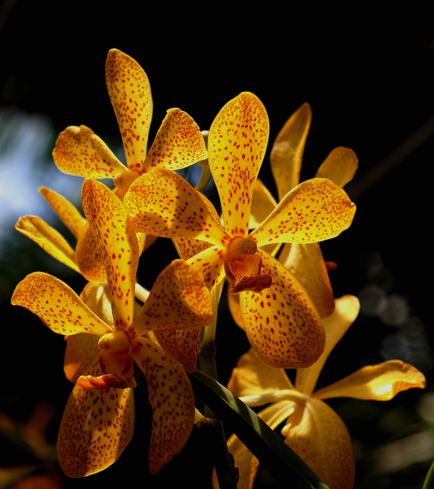 For all the orchid lovers on FC.